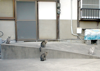 0523_cat.jpg