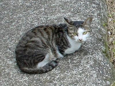 081001_cat.jpg