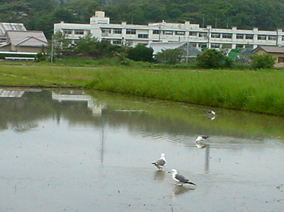 090521_umineko.jpg