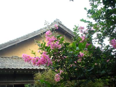090812_sarusuberi.jpg