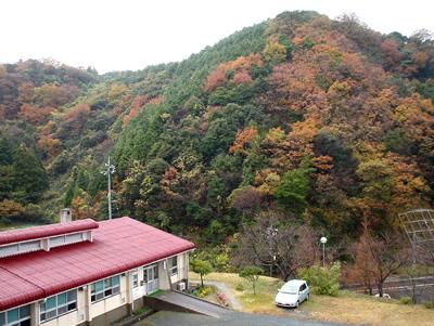 091203_koyo.jpg