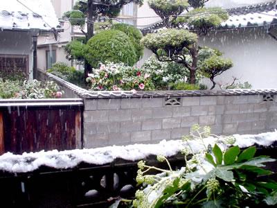 100309_snowgarden.jpg