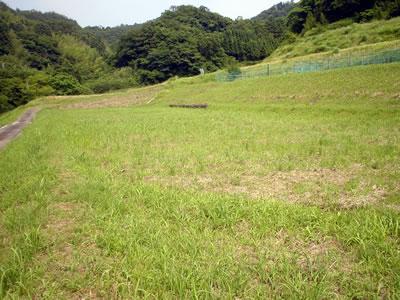 100617_taro.jpg