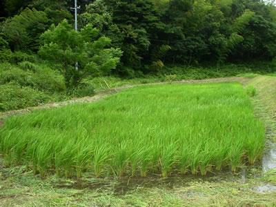 100811_saburo02.jpg