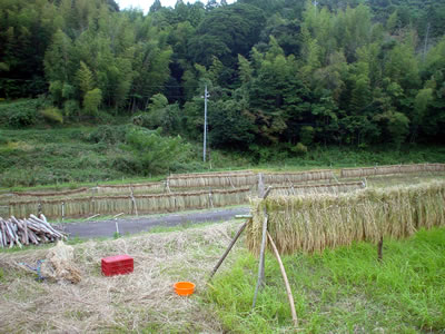 101020_tarojiro.jpg