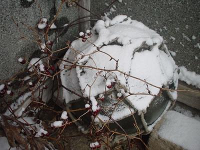 110116_snow04.jpg