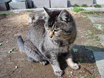 mother_cat.jpg