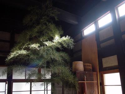 nishibi.jpg
